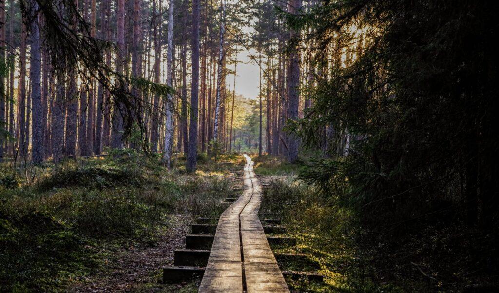 een wandeling door de natuur kan wonderen doen voor een gespannen lichaam en geest